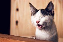adorable-animal-animal-photography-1183434