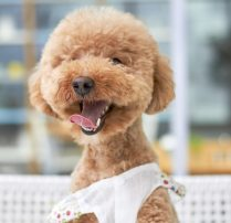 adorable-animal-breed-264206